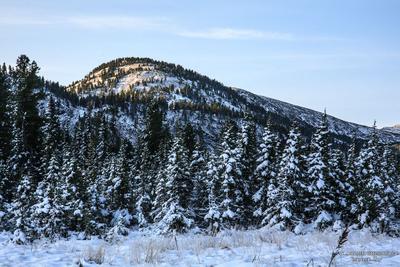 *** Хамар-Дабан зимние фото снег лежит на деревьях