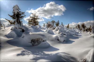Карельские снега снег елки зима солнце небо