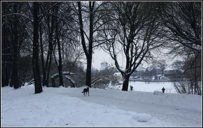 Псков, январь 2010 г. Псков, река Великая, Мирошский монастырь, январь, лед, собака, лыжники, купола, зима, снег, холодно