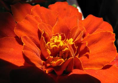 *** природа лето цветы макро
