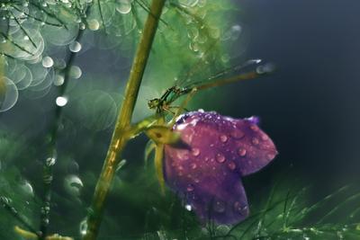 Отголосок неизведанного макро природа стрекоза