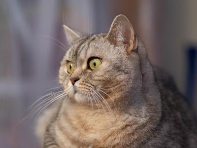 *** животные коты кошки