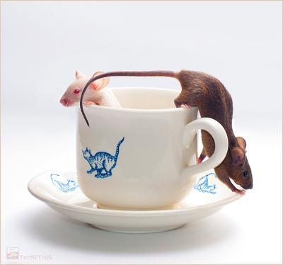 Чашки-мышки мышки чашка