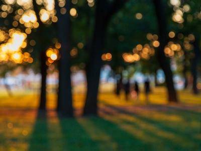 вечер деревья вечер