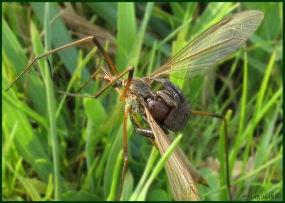 НЕповезло... паук клещ стрекоза комар