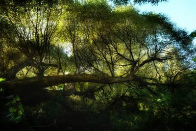Приближаясь к равноденствию (2) осень сентябрь лес