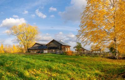 Гуляла осень по деревне... осень октябрь деревенька березка листья небо вятка