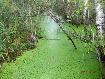 Зеленый рай