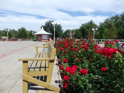 в парке парк роза