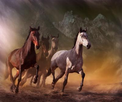 Run IV Digital Photo Art Horses Eltons Fantasies