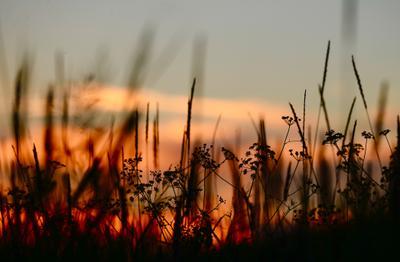 закат в степи