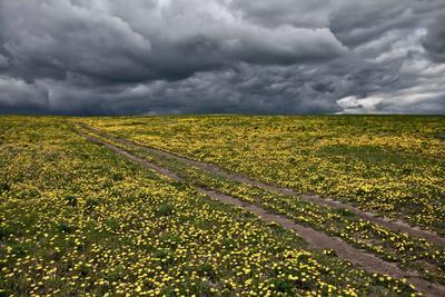Дорога к небу. Тучи поле одуванчики