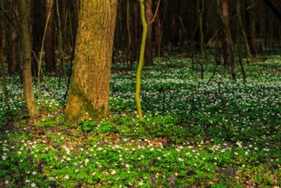 Цветочный ковёр лес цветы весна ковёр