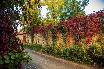 Осенний переулок пейзаж осень переулок татарстан октябрьский