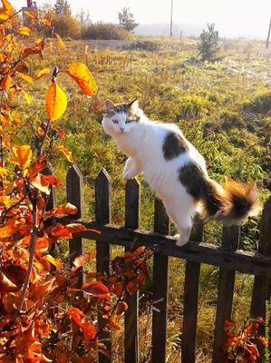 Алиса. животные кошка осень настроение