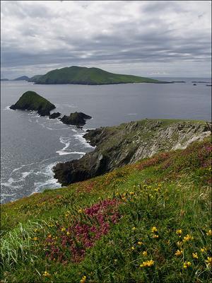 Вот бы пощелкать с тех островов гряда острова цветы трава