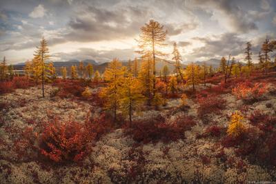 """""""Лесотундра осенью"""" Колыма Дальний Восток Магаданская область краски осени осень"""