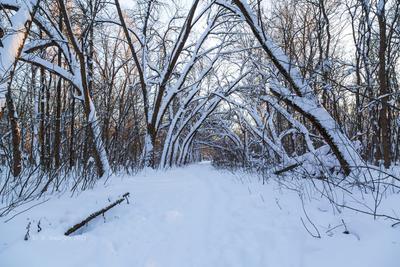 В зиму зимний пейзаж снег деревья