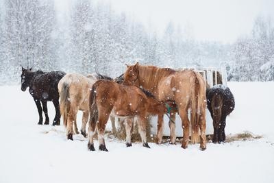 Снежное спокойствие снег лошади зима снегопад мороз деревня