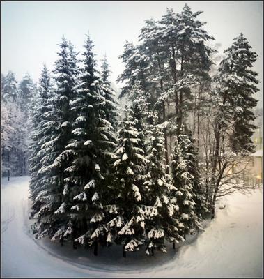 Опять метель... зима