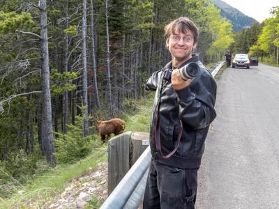 Медведь! Alberta Waterton bear медведь Альберта