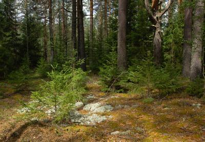 В лесу лес лето