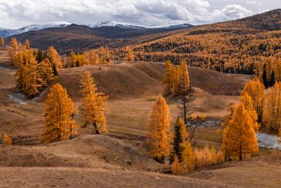 Алтайская осень Республика Алтай осень октябрь лиственницы