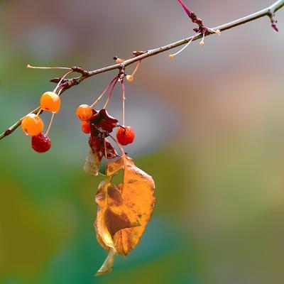 Осенний лист осень лист