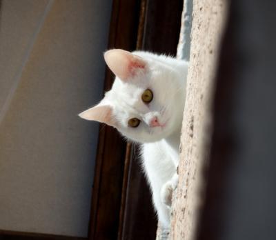 взгляд сверху кот кошка