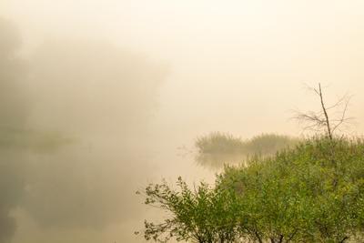 В утренней тишине. Утро пруд туман трава растения дерево