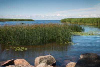 Июльский полдень Петергоф Финский залив лето июль