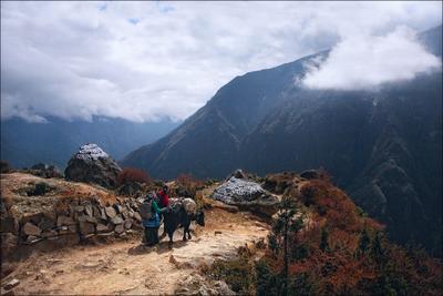 В гости Непал, Гималаи, горы, як