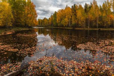 На таёжном озере. Осень Осень озеро тайга