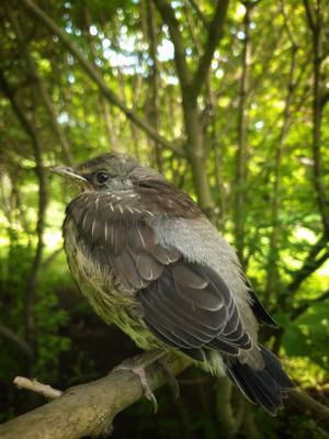 *** природа птица весна