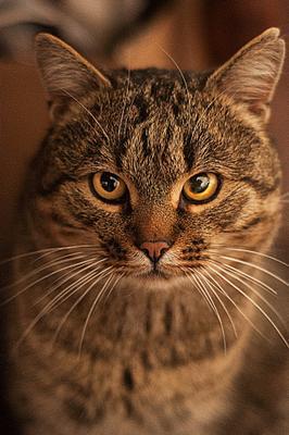 *** кот село животные