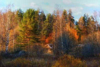 Карелия, осень (2) осень лес