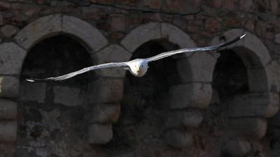 из тени в свет чайка, башня, крепость, испания
