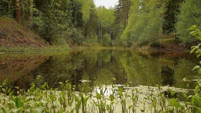 Пруды Павловского парка 2 Павловский парк весна пруд лес