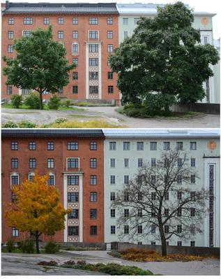 ....и деревья стареют по разному....