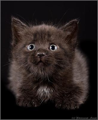 В хорошие руки котенок черный