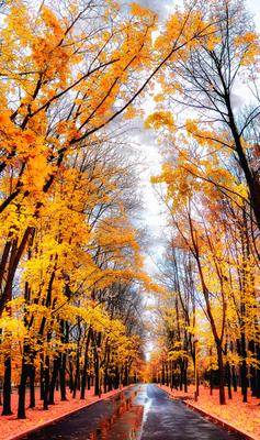 Осень золотых аллей осень