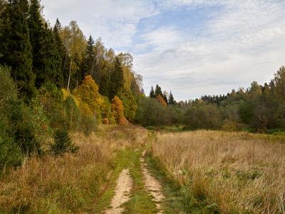 Золотая осень #2