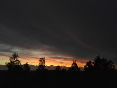 *** пейзаж лес природа закат