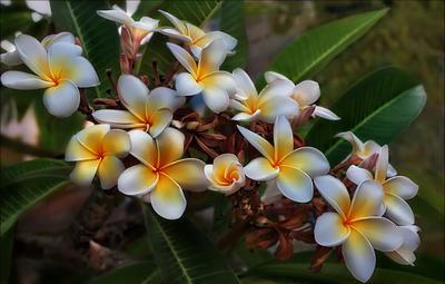 Цветы как бабочки, а бабочки - цветы Летят над нашей жизнью легкокрыло, И падают, срываясь с высоты, Когда им жизнь покажется постылой. Кипр