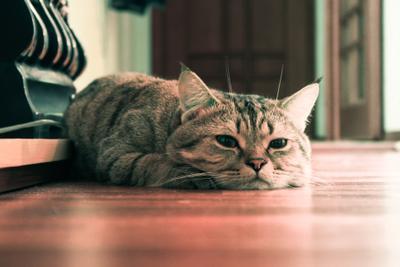 Выходной Кот уют дом животные камин спокойствие котик