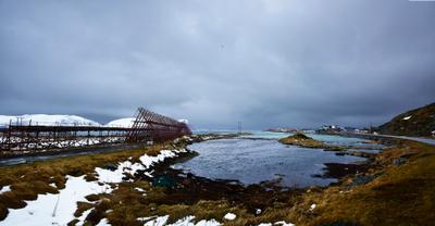 Заготовка тресковых голов. Остров Сёрёйя. Норвегия. Море Природа Север Треска Норвегия
