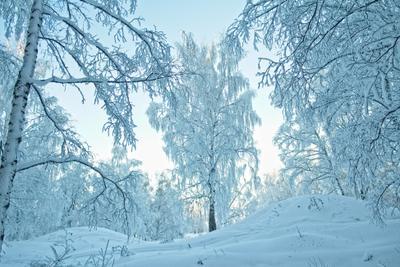 вечерний блюз) зима природа березовая роща мороз прогулка иней сибирь