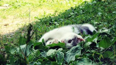 Елиза кошка