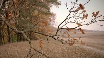 *** Autumn