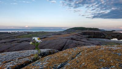 Один ромашка скалы море камни белое остров кий